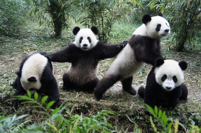 5 façons de séduire Google Panda 4.1